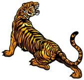 Tiger royalty free illustration