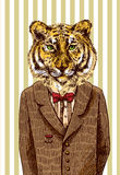 Tiger in jacket. Stock Photo