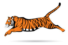 Tiger jumping Royalty Free Stock Image