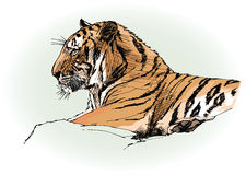 Tiger in jungle. Vector illustration of a tiger in jungle Royalty Free Stock Images