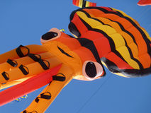Tiger Kite Stock Photo