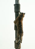 Tiger klettert stockbilder