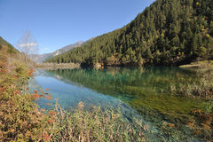 Tiger lake in Jiuzhaigou Stock Image