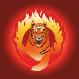 The tiger leaping through fire. Tiger leaping through  fire hoop Stock Photography
