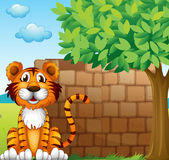 A tiger at the left side of a brick wall Stock Photography