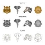 Tiger lejon, elefant, sebra, fastställda samlingssymboler för realistiska djur i tecknade filmen, översikt, monokromt stilvektors Arkivfoto