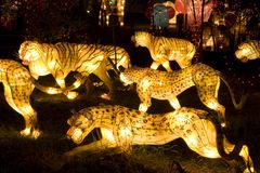 Tiger and Leopard Lanterns Royalty Free Stock Image