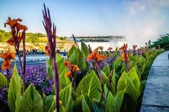 Tiger Lilies i den Niagara nedgången på Kanada, Ontario Arkivbild
