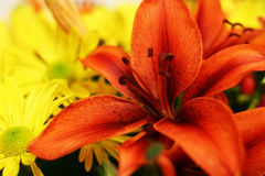 Tiger Lilly And Daisies Stock Photography