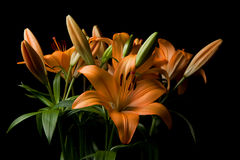 Tiger Lily flower arrangement Royalty Free Stock Photo
