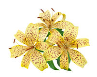 Tiger lily flowers on a white Stock Photo