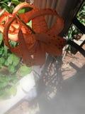Tiger Lily nebbioso Immagine Stock