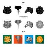 Tiger, lion, elephant, zebra, Realistic animals set collection icons in black, flat, monochrome style vector symbol. Stock illustration stock illustration