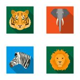 Tiger, lion, elephant, zebra, Realistic animals set collection icons in flat style vector symbol stock illustration web. Stock Photos