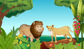 A tiger and a lion. Illustration of a tiger and a lion in the jungle stock illustration