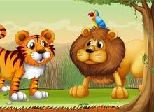 A tiger, a lion and a parrot Stock Photos