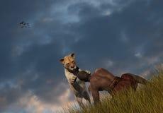Tiger Lion Pouncing On Man Illustration Royaltyfria Bilder