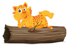Tiger on a log Royalty Free Stock Photos