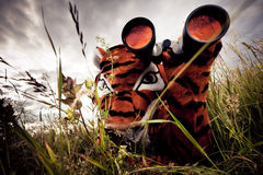 Tiger Looking For Prey Royalty Free Stock Photos