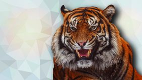 Tiger in the low poly style. Vector illustration. royalty free illustration