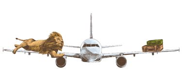 Tiger lying on the wing of the plane with suitcases Royalty Free Stock Image