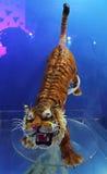 Tiger made of sugar stock photo