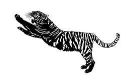 Tiger Illustration Royalty Free Stock Image