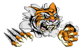Tiger mascot claw breakthrough Royalty Free Stock Photos