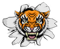 Tiger mascot ripping through Stock Photography