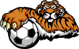 Tiger Mascot with Soccer Ball Illustration. Graphic Mascot Vector Image of a Tiger with Paws on a Soccer Ball Stock Images