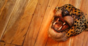Tiger Mask på trägolv Royaltyfri Fotografi
