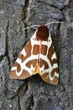 Tiger Moth Royalty Free Stock Photo