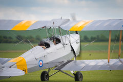 Tiger moth Stock Image