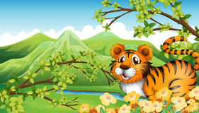 A tiger in the mountain near the flowing river Stock Photography