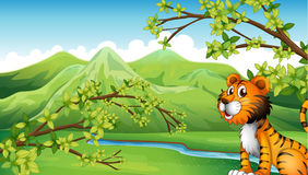 A tiger in a mountain scenery stock illustration