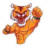 Tiger muscle Royalty Free Stock Image