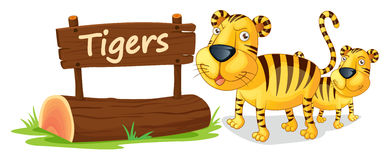 Tiger and name plate Stock Images