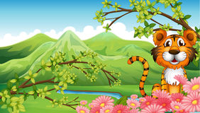 A tiger near the flowers across the mountains Stock Image