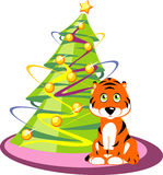 Tiger and New Year tree. The tiger sits near a New Year tree. A vector illustration Royalty Free Stock Photo
