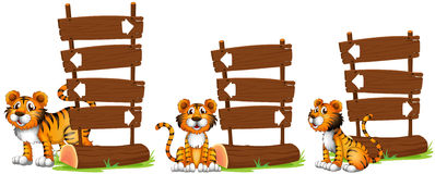 Tiger nex to wooden signs Royalty Free Stock Photo