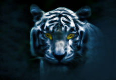 Tiger in night Royalty Free Stock Photo
