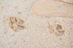 Tiger- oder Katzenfußschritt auf Schlamm Lizenzfreies Stockbild