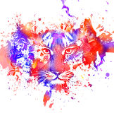 Tiger with paint splashes Stock Image