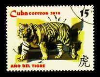 Tiger Panthera Tigris, Jaar van tijger serie, circa 2010 Stock Foto's