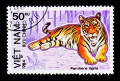 Tiger (Panthera tigris), utsatt för fara djurserie, circa 1984 Royaltyfri Bild