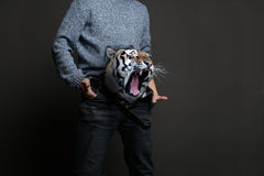 Tiger in Pants Royalty Free Stock Photos