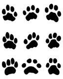 Tiger Paw Fotografia de Stock