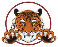 Tiger with paws and sign. Muzzle of tiger with paws peek up from red road sign Royalty Free Stock Image