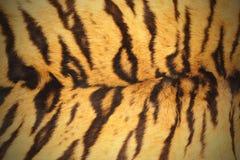 Tiger pelt Stock Photo