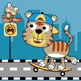 A tiger playing skateboard in the city road at car free day, vector cartoon illustration. Animals in the road with skateboard. Vector cartoon illustration, no royalty free illustration
